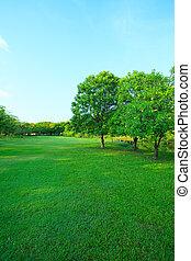 beau, plante, herbe, vertical, formulaire, espace, lumière, polyvalent, parc, arbre, matin, champ, vert, perspective, frais, copie, public