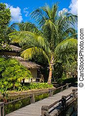 beau, pont, arbre tropical, paume, thaïlande