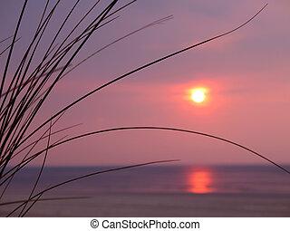 beau, premier plan., sur, dune, océan, coucher soleil, herbe