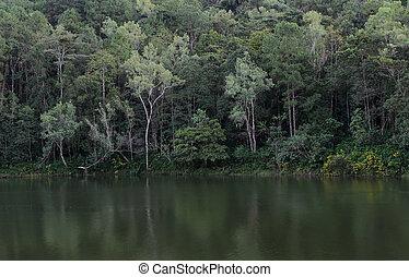 beau, réflexion arbre, pin, vue