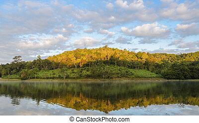 beau, reflet, arbre, lac, pin, matin, vue