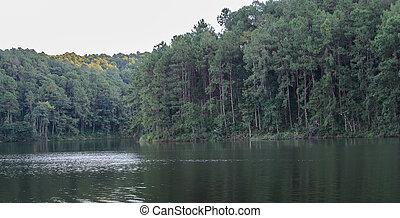 beau, reflet, arbre, lac, pin, vue