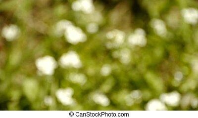 beau, sauvage, grass., fleurs