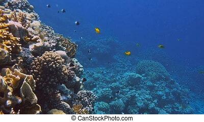 beau, sous-marin, coloré, exotique, coraux, poissons