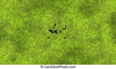 beau, utile, processus, printemps, animation., transitions., concept., matte., 3840x2160, nouvelle vie, nature, écran, mousse, alpha, hd, ultra, couverture, vert, 4k, croissant, herbe