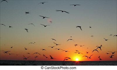 beau, voler, contre, 1, coucher soleil, lot, oiseaux