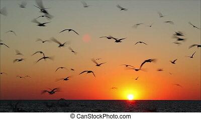 beau, voler, contre, 2, coucher soleil, lot, oiseaux