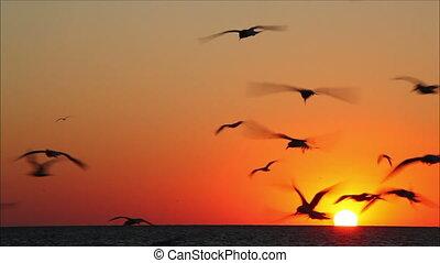 beau, voler, contre, 3, coucher soleil, lot, oiseaux