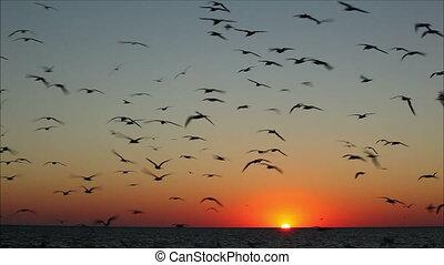 beau, voler, contre, 5, lot, coucher soleil, oiseaux