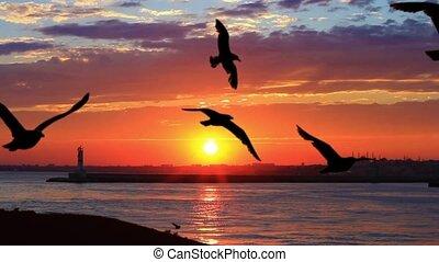 beau, voler, mouettes, contre, oiseaux mer, coucher soleil, suivre, bateau, troupeau, sunset.