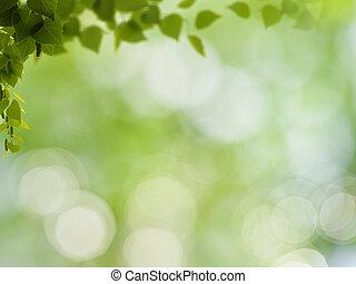 beauté naturelle, résumé, arrière-plans, bokeh, feuillage, bouleau