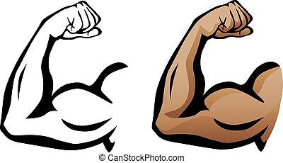 bicep, musculaire, fléchir, bras