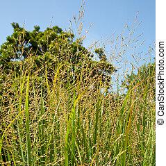 bio, utilisé, ferme, commutateur, carburant, herbe
