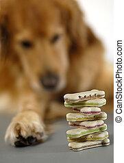 biscuits, chien