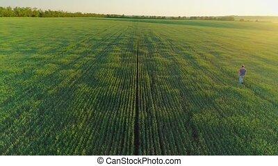 blé, agricole, homme, vidéo, champ, aérien