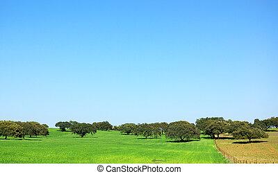 blé, chêne, region., arbres, champ, extremadura