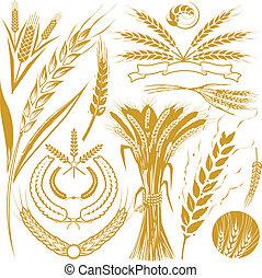 blé, collection