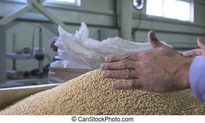 blé, grains, fermier, haut, récolte, tenant mains, fin
