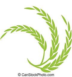 blé, vert