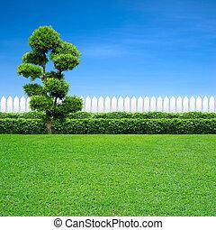 blanc, arbre, barrière