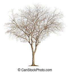 blanc, arbre, fond
