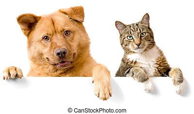 blanc, bannière, chien, au-dessus, chat