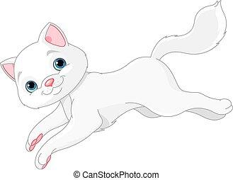 blanc, chaton