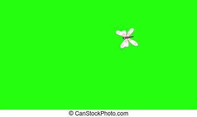 blanc, chroma, mouches, papillon