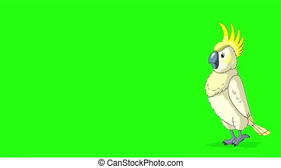 blanc, clã©, perroquet, cacatoès, va, loin, vient, chroma