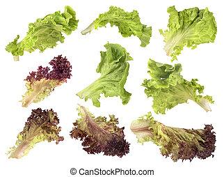 blanc, ensemble, salade, fond