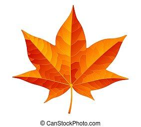 blanc, feuille, orange, résumé, automne, isolé, fond