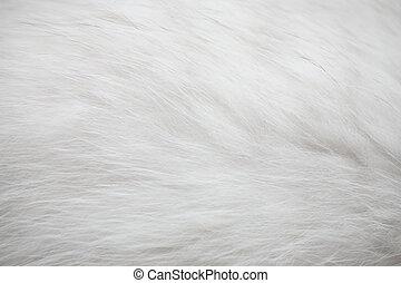 blanc, fourrure, texture, fond