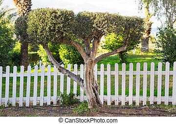 blanc, herbe, vert, barrière