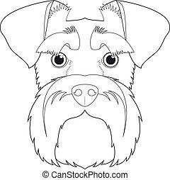 blanc, vecteur, facile, chien, dessin animé, coloration, schnauzer, isolé, fond, illustration.