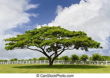 blanc vert, arbre, barrière, suivant