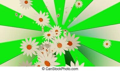 blanc, voler, sunburst, fleurs