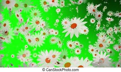 blanc, voler, vert, fleurs