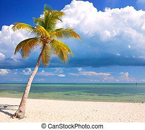 bleu, été, nuages, ciel, usa, floride, clair, arbres, eau, clés, océan, exotique, cristal, paume, paradis, atlantique