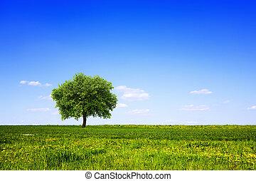 bleu, arbre, ciel, champ vert