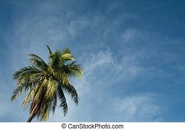 bleu, arbre, noix coco, ciel, arrière-plan.