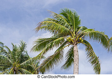 bleu, arbre, noix coco, ciel, fond