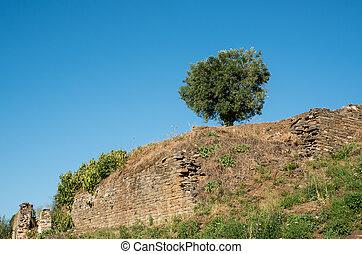bleu, arbre, unique, olive, ciel