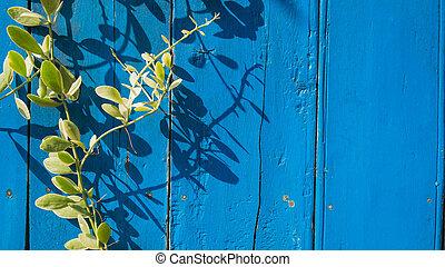 bleu, bois, lierre, fond