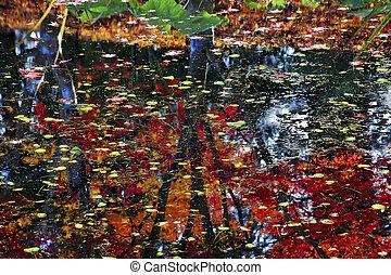 bleu, canada, fourgon, dusen, vancouver, arbre, coussins, britannique, couleurs eau, jaune, vert, réflexions, automne, colombie, lis, jardins, rouges