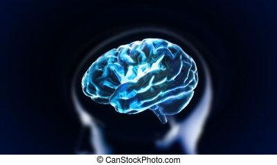 bleu, cerveau, tête, section, lueur
