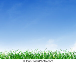 bleu, ciel clair, vert, sous, herbe