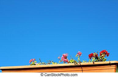 bleu, coloré, ciel, fleurs