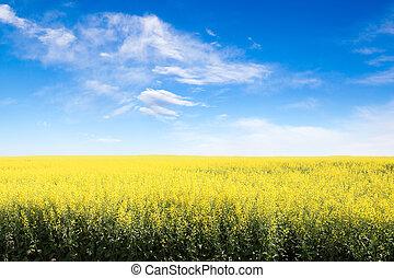 bleu, contre, espace, ciel, nuageux, champ, jaune, copie