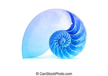 bleu, coquille, modèle, célèbre, nautile, fibonacci, géométrique