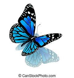 bleu, couleur, papillon, blanc